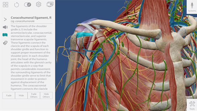 Human Anatomy Atlas for zSpace