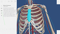 How To… Human anatomy Atlas (Visible Body) video