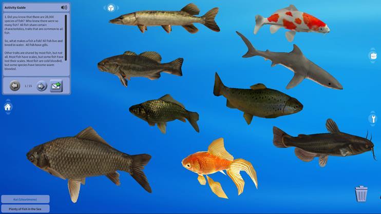 바다의 많은 물고기