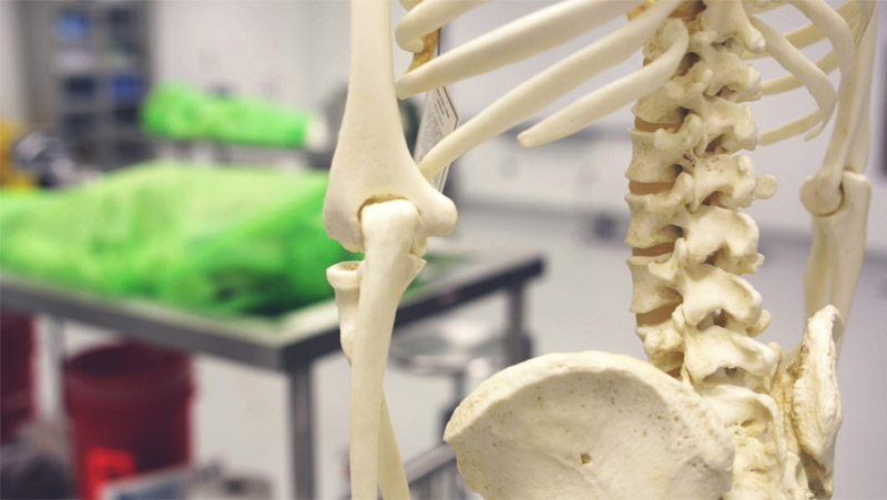 How VR & AR Are Changing Anatomy Class